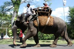 Wisata Safari Gajah Borobudur