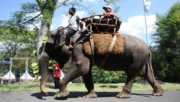 safari gajah magelang