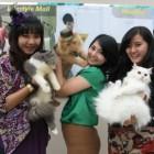 Magelang Beloved Cats (MBC), Komunitas Pecinta Kucing di Magelang